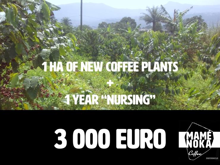 1ha-of-plants