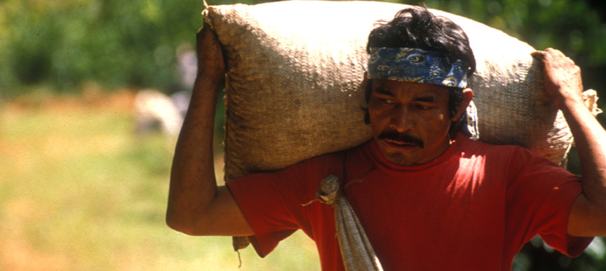 Mamé Noka Coffee - Hacienda Rio Negro - Farm Worker.png